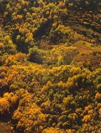 旅游区 席勒/察哈尔右翼中旗黄花旅游区,位于乌兰察布盟北部,阴山支脉的...